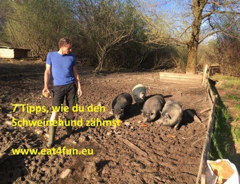 7 Tipps, wie du den Schweinehund zähmst